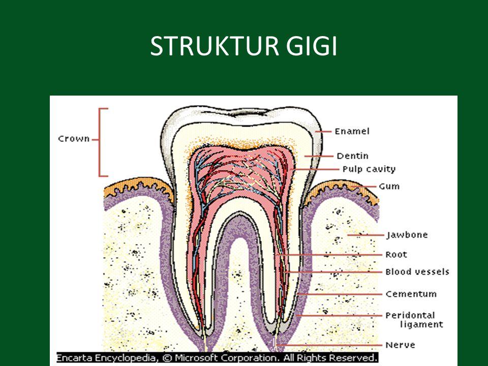 Gigi Memiliki fungsi memotong, mengoyak dan menggiling makanan menjadi partikel yang kecil-kecil.