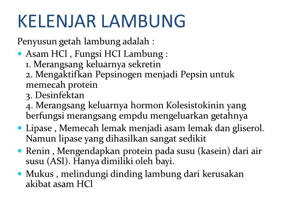 KELENJAR LAMBUNG Penyusun getah lambung adalah : Asam HCl, Fungsi HCI Lambung : 1. Merangsang keluarnya sekretin 2. Mengaktifkan Pepsinogen menjadi Pe