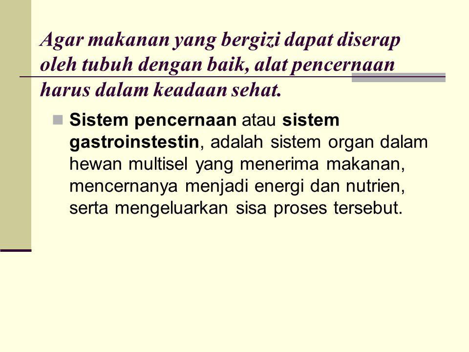 jejunum Usus kosong atau jejunum (terkadang sering ditulis yeyunum) adalah bagian kedua dari usus halus, di antara usus dua belas jari (duodenum) dan usus penyerapan (ileum).