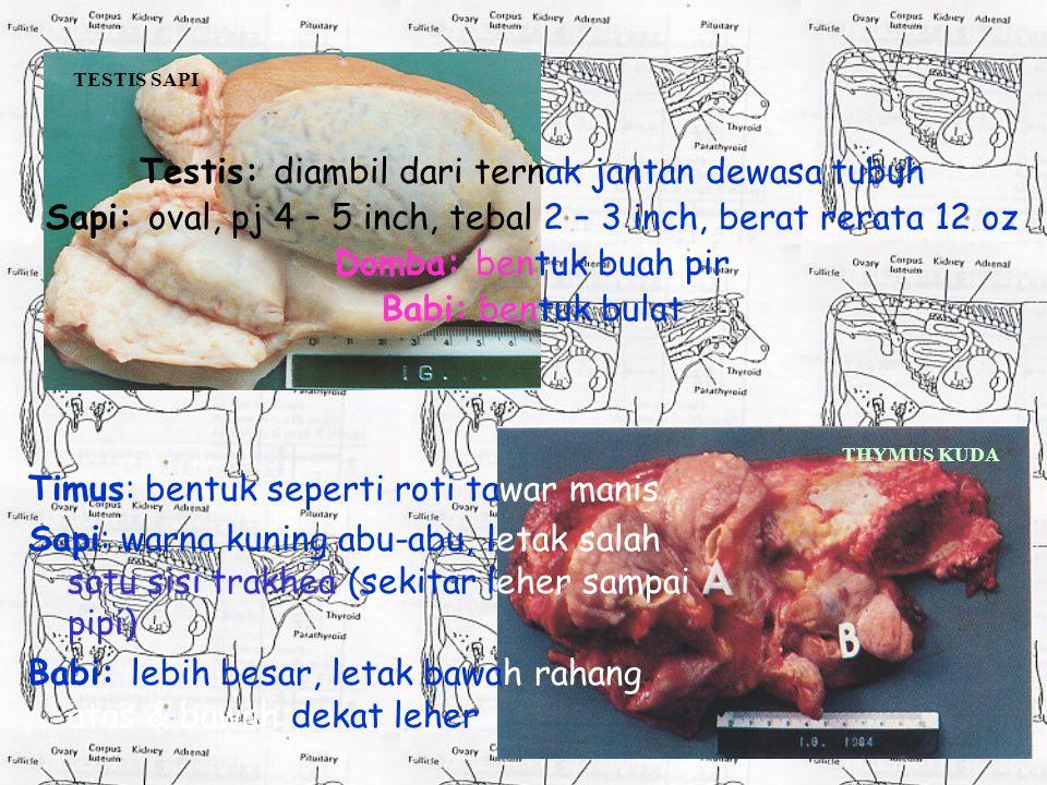 Timus: bentuk seperti roti tawar manis Sapi: warna kuning abu-abu, letak salah satu sisi trakhea (sekitar leher sampai pipi) Babi: lebih besar, letak bawah rahang atas & bawah dekat leher Testis: diambil dari ternak jantan dewasa tubuh Sapi: oval, pj 4 – 5 inch, tebal 2 – 3 inch, berat rerata 12 oz Domba: bentuk buah pir Babi: bentuk bulat TESTIS SAPI THYMUS KUDA