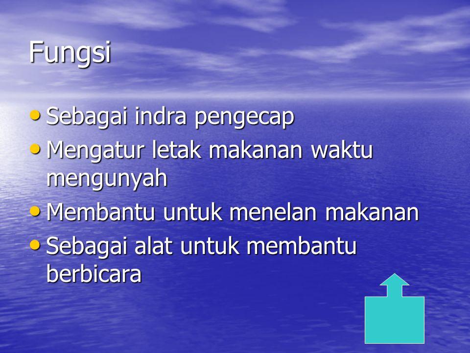 Indra pengecap Lidah terdiri dari 10.000 kuncup pengrasa yang tersebar di permukaan atas dan sepanjang pinggir lidah.