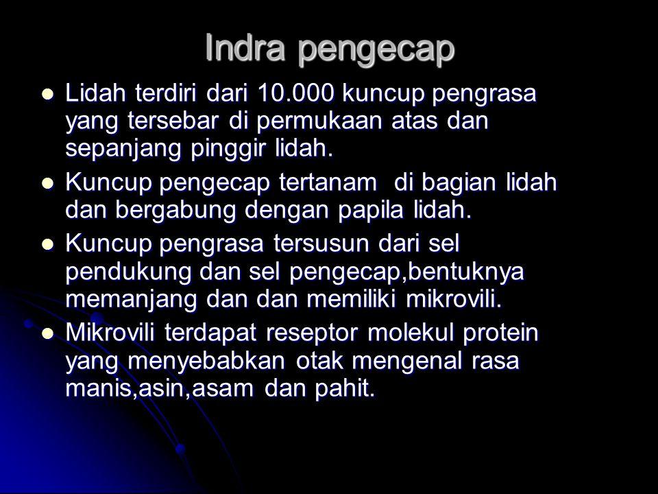 Indra pengecap Lidah terdiri dari 10.000 kuncup pengrasa yang tersebar di permukaan atas dan sepanjang pinggir lidah. Lidah terdiri dari 10.000 kuncup