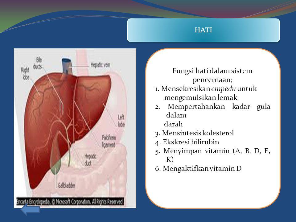 HATI Fungsi hati dalam sistem pencernaan; 1.Mensekresikan empedu untuk mengemulsikan lemak 2.