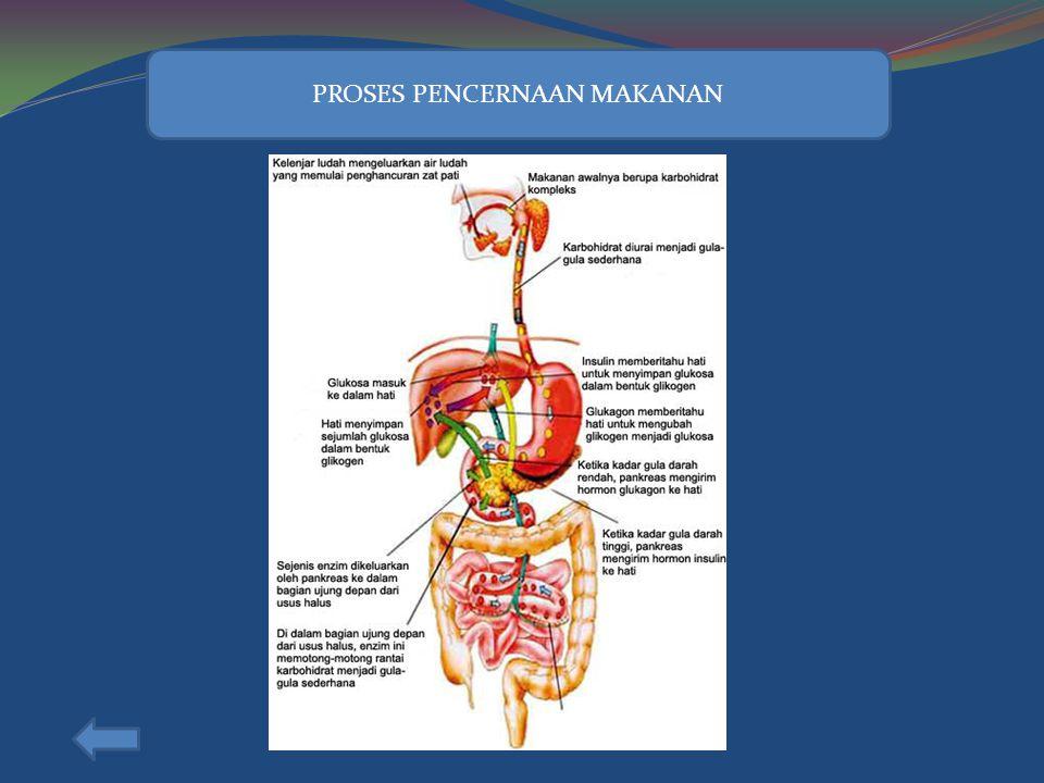 HATI Fungsi hati dalam sistem pencernaan; 1. Mensekresikan empedu untuk mengemulsikan lemak 2. Mempertahankan kadar gula dalam darah 3. Mensintesis ko