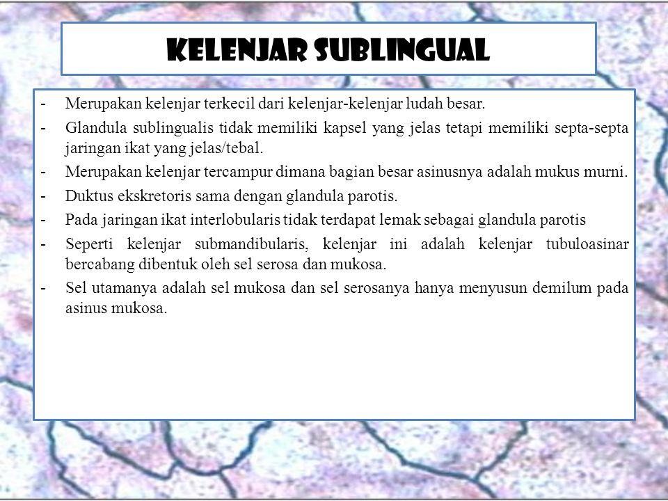 Kelenjar Sublingual -Merupakan kelenjar terkecil dari kelenjar-kelenjar ludah besar. -Glandula sublingualis tidak memiliki kapsel yang jelas tetapi me