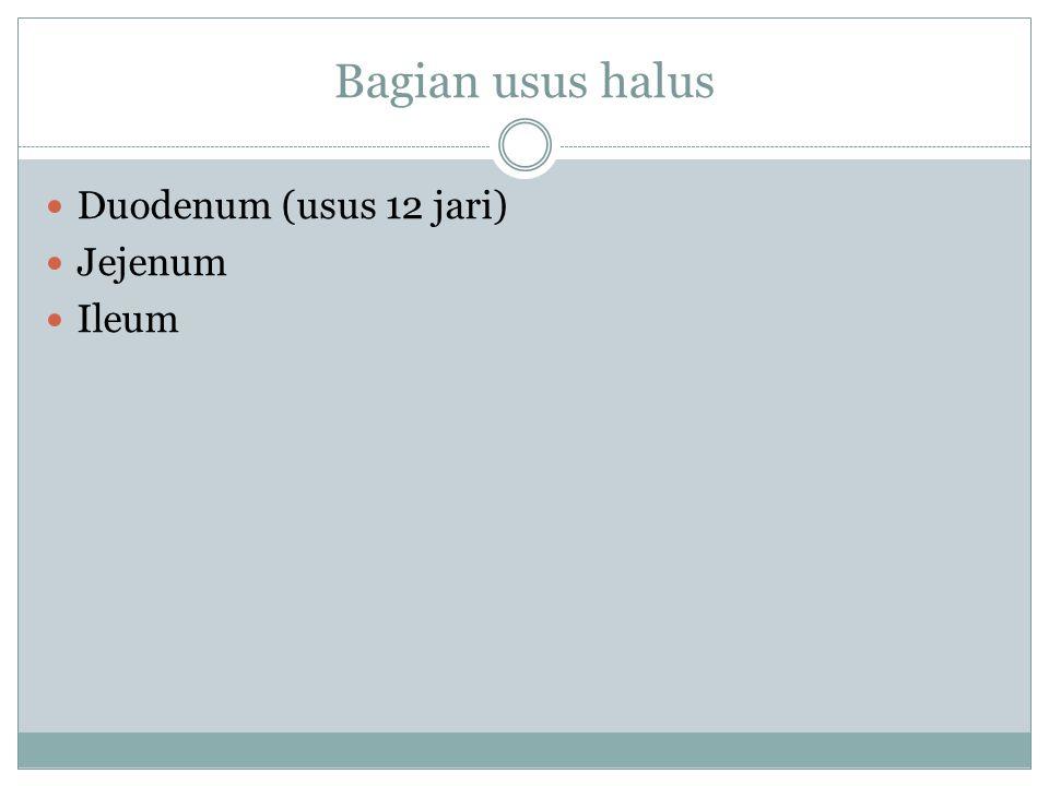 Bagian usus halus Duodenum (usus 12 jari) Jejenum Ileum
