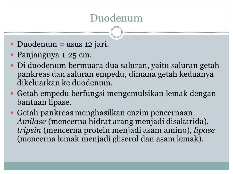 Duodenum Duodenum = usus 12 jari. Panjangnya ± 25 cm. Di duodenum bermuara dua saluran, yaitu saluran getah pankreas dan saluran empedu, dimana getah