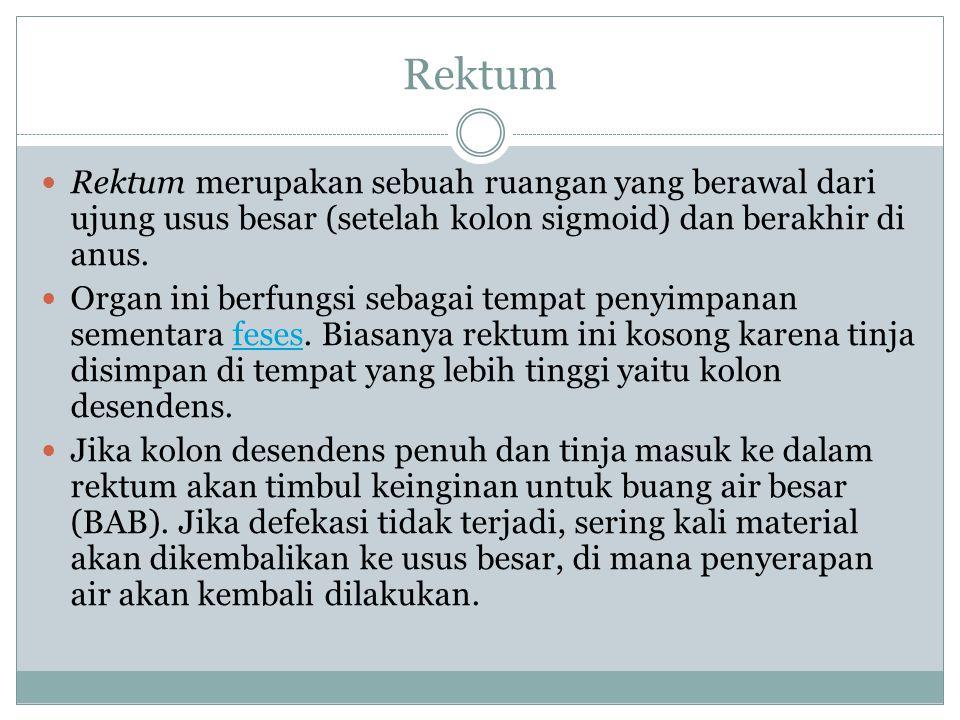Rektum Rektum merupakan sebuah ruangan yang berawal dari ujung usus besar (setelah kolon sigmoid) dan berakhir di anus. Organ ini berfungsi sebagai te