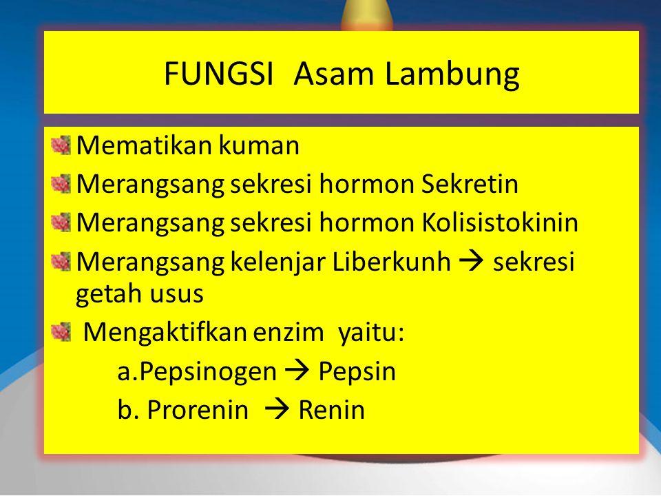 FUNGSI Asam Lambung Mematikan kuman Merangsang sekresi hormon Sekretin Merangsang sekresi hormon Kolisistokinin Merangsang kelenjar Liberkunh  sekresi getah usus Mengaktifkan enzim yaitu: a.Pepsinogen  Pepsin b.