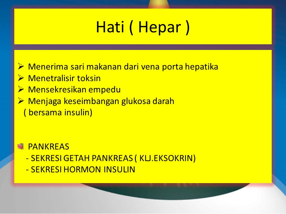 Hati ( Hepar )  Menerima sari makanan dari vena porta hepatika  Menetralisir toksin  Mensekresikan empedu  Menjaga keseimbangan glukosa darah ( bersama insulin) PANKREAS - SEKRESI GETAH PANKREAS ( KLJ.EKSOKRIN) - SEKRESI HORMON INSULIN