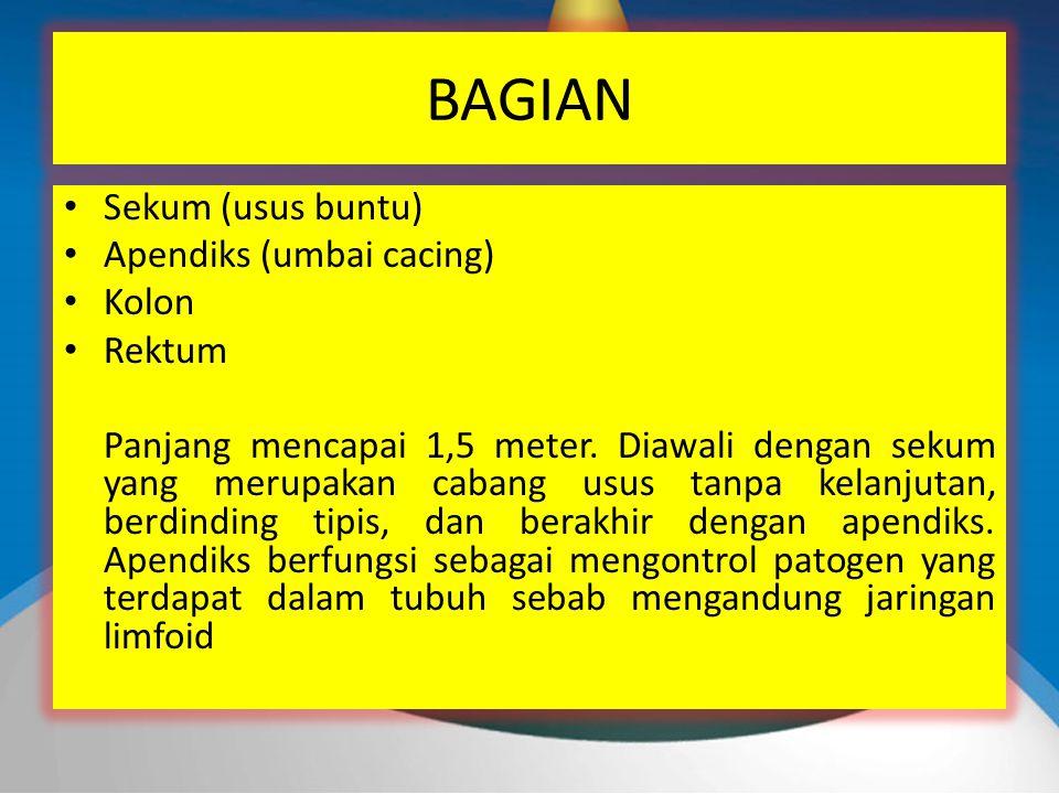 BAGIAN Sekum (usus buntu) Apendiks (umbai cacing) Kolon Rektum Panjang mencapai 1,5 meter.