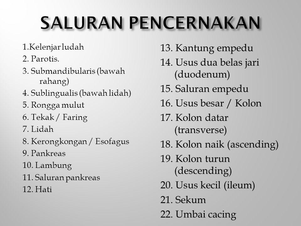 1.Kelenjar ludah 2. Parotis. 3. Submandibularis (bawah rahang) 4. Sublingualis (bawah lidah) 5. Rongga mulut 6. Tekak / Faring 7. Lidah 8. Kerongkonga
