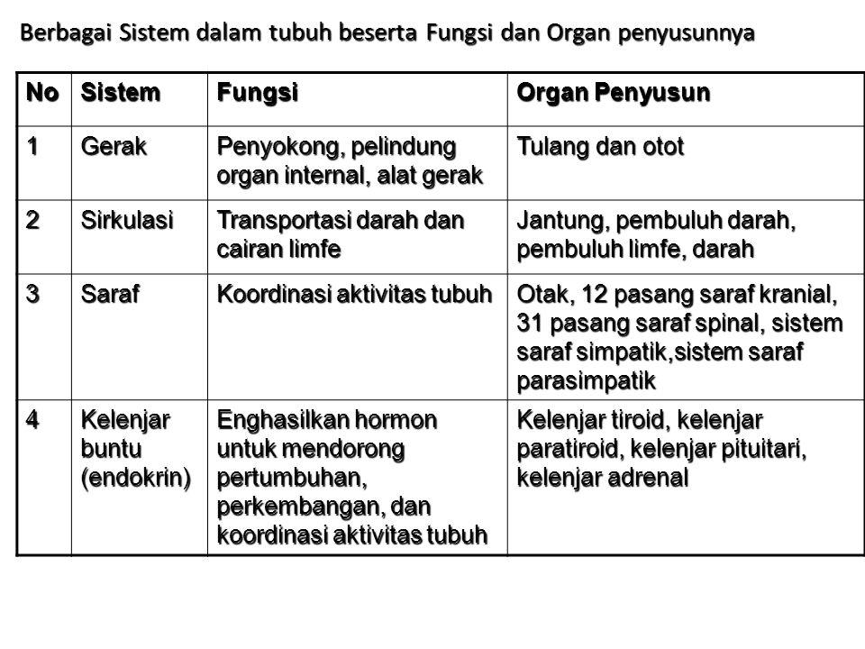 NoSistemFungsi Organ Penyusun 1Gerak Penyokong, pelindung organ internal, alat gerak Tulang dan otot 2Sirkulasi Transportasi darah dan cairan limfe Ja