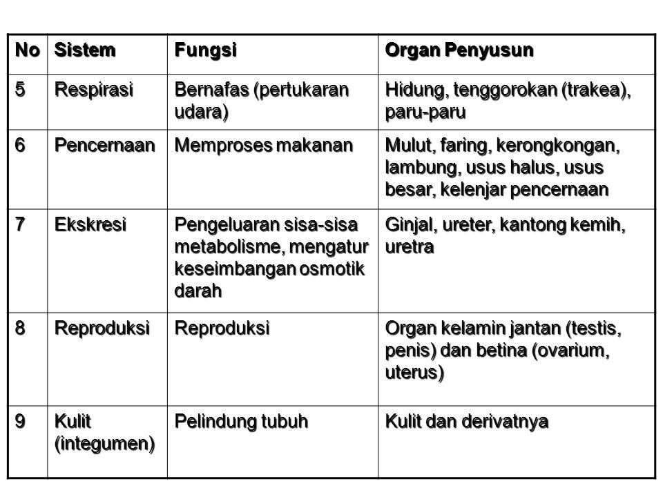 NoSistemFungsi Organ Penyusun 5Respirasi Bernafas (pertukaran udara) Hidung, tenggorokan (trakea), paru-paru 6Pencernaan Memproses makanan Mulut, fari