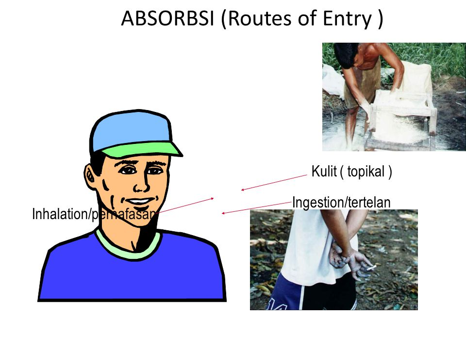 ABSORBSI (Routes of Entry ) Kulit ( topikal ) Ingestion/tertelan Inhalation/pernafasan