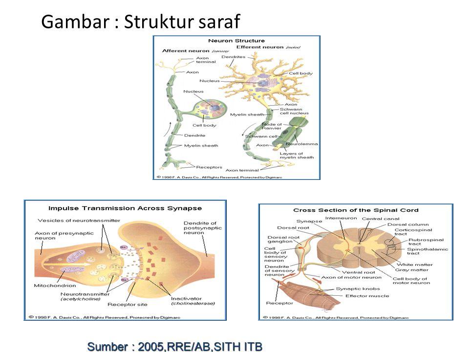 Gambar : Struktur saraf Sumber : 2005,RRE/AB,SITH ITB