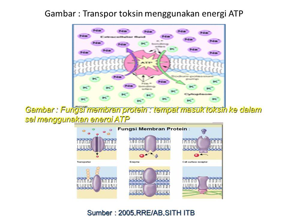 Gambar : Transpor toksin menggunakan energi ATP Gambar : Fungsi membran protein : tempat masuk toksin ke dalam sel menggunakan energi ATP Sumber : 200