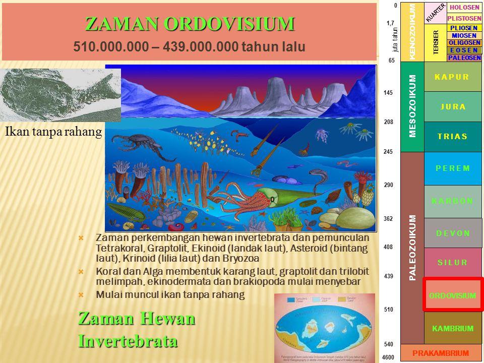 ZAMAN ORDOVISIUM  Zaman perkembangan hewan invertebrata dan pemunculan Tetrakoral, Graptolit, Ekinoid (landak laut), Asteroid (bintang laut), Krinoid