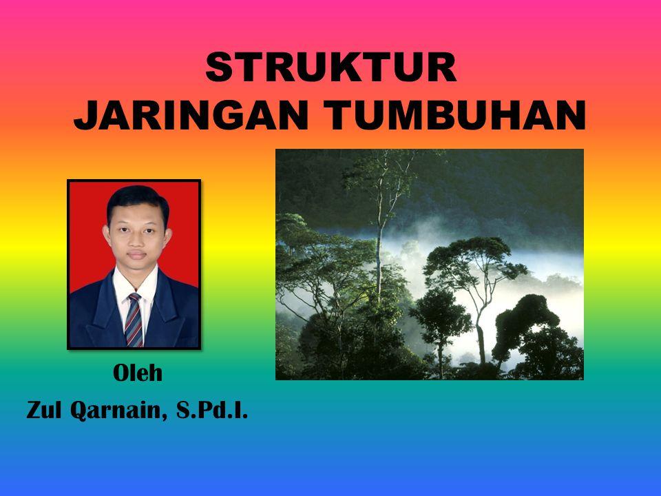 STRUKTUR JARINGAN TUMBUHAN Oleh Zul Qarnain, S.Pd.I.