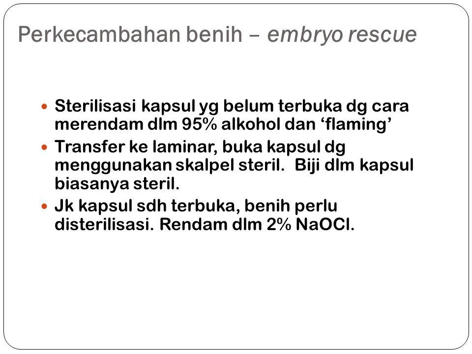 Perkecambahan benih – embryo rescue Sterilisasi kapsul yg belum terbuka dg cara merendam dlm 95% alkohol dan 'flaming' Transfer ke laminar, buka kapsul dg menggunakan skalpel steril.