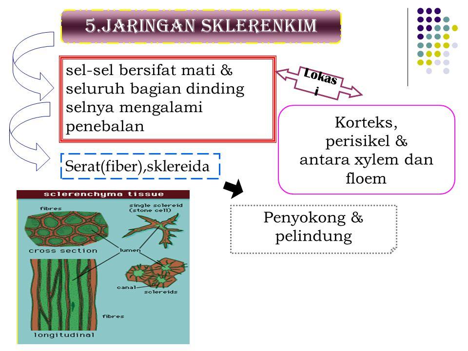 5.Jaringan sklerenkim sel-sel bersifat mati & seluruh bagian dinding selnya mengalami penebalan Lokas i Korteks, perisikel & antara xylem dan floem Se