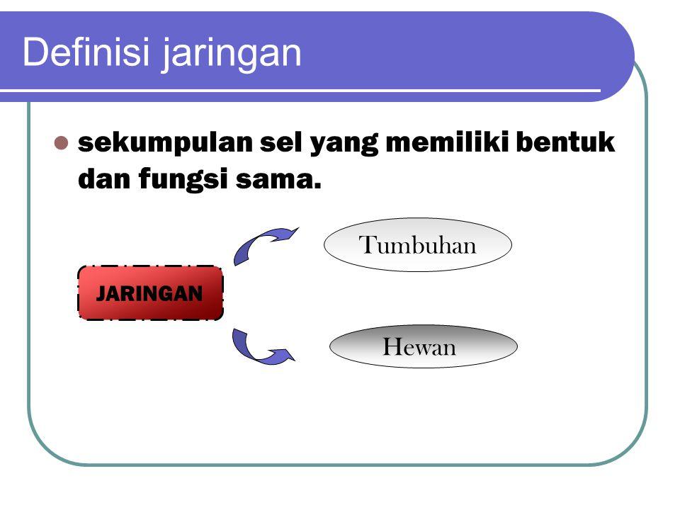 Definisi jaringan sekumpulan sel yang memiliki bentuk dan fungsi sama. JARINGAN Tumbuhan Hewan
