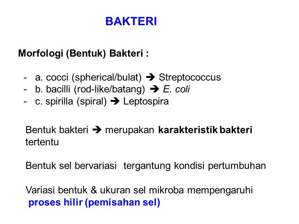 BAKTERI Morfologi (Bentuk) Bakteri : - a. cocci (spherical/bulat)  Streptococcus - b. bacilli (rod-like/batang)  E. coli - c. spirilla (spiral)  Le
