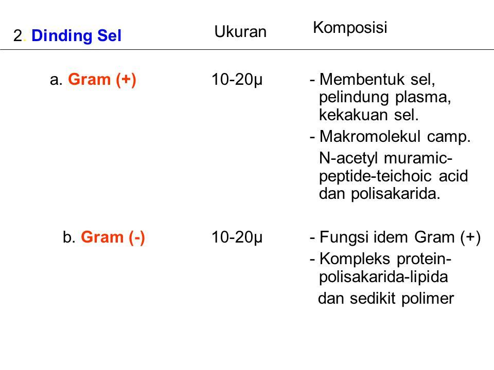 2. Dinding Sel a. Gram (+)10-20µ- Membentuk sel, pelindung plasma, kekakuan sel. - Makromolekul camp. N-acetyl muramic- peptide-teichoic acid dan poli