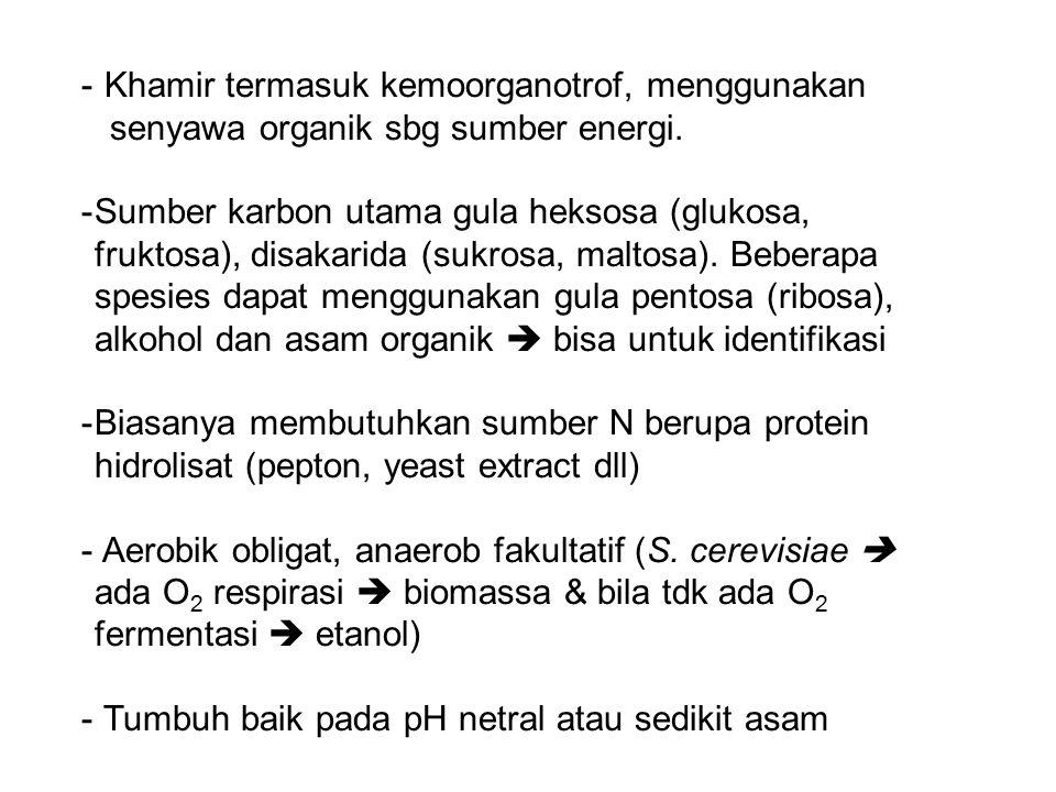 - Khamir termasuk kemoorganotrof, menggunakan senyawa organik sbg sumber energi. -Sumber karbon utama gula heksosa (glukosa, fruktosa), disakarida (su