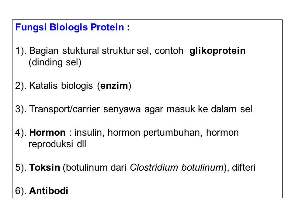 Fungsi Biologis Protein : 1). Bagian stuktural struktur sel, contoh glikoprotein (dinding sel) 2). Katalis biologis (enzim) 3). Transport/carrier seny