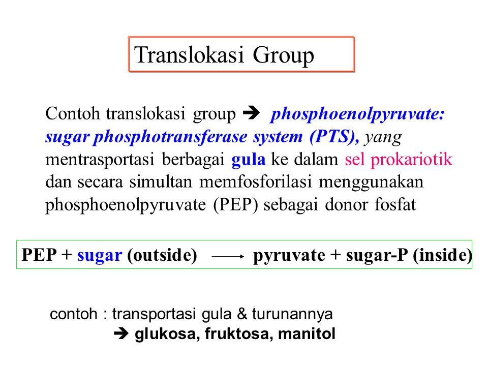 Contoh translokasi group  phosphoenolpyruvate: sugar phosphotransferase system (PTS), yang mentrasportasi berbagai gula ke dalam sel prokariotik dan
