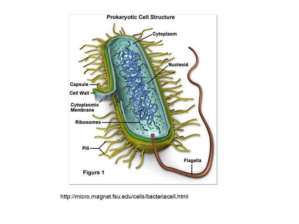 Sel prokariotik biasanya berukuran sel lebih kecil dan lebih sederhana dibandingkan sel eukariotik.