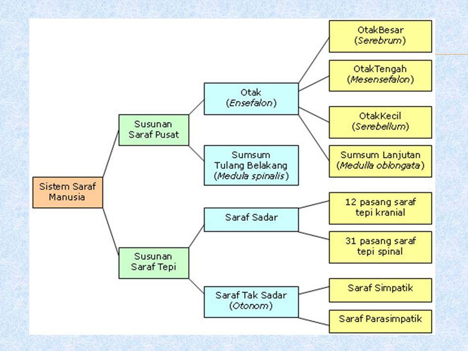  Saraf kranial otonom adalah saraf cranial ketiga,ketujuh,kesembilan,dan kesepuluh.