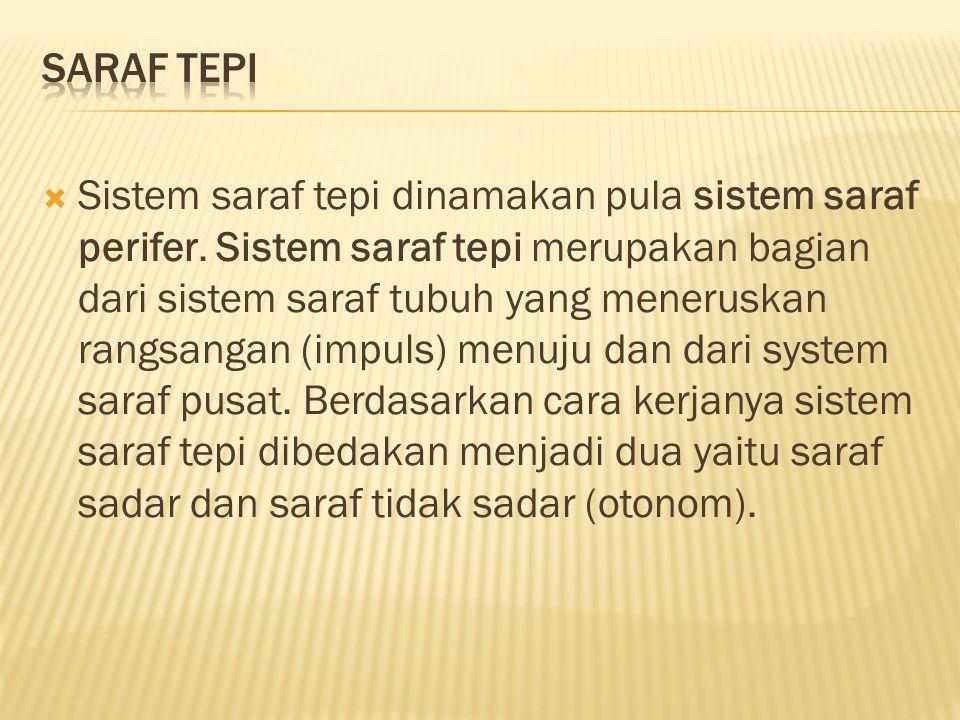  Sistem saraf tepi dinamakan pula sistem saraf perifer.