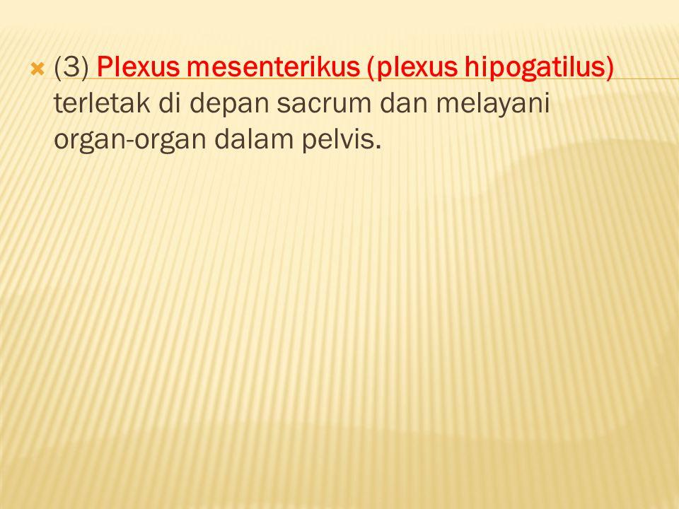  (3)Plexus mesenterikus (plexus hipogatilus) terletak di depan sacrum dan melayani organ-organ dalam pelvis.