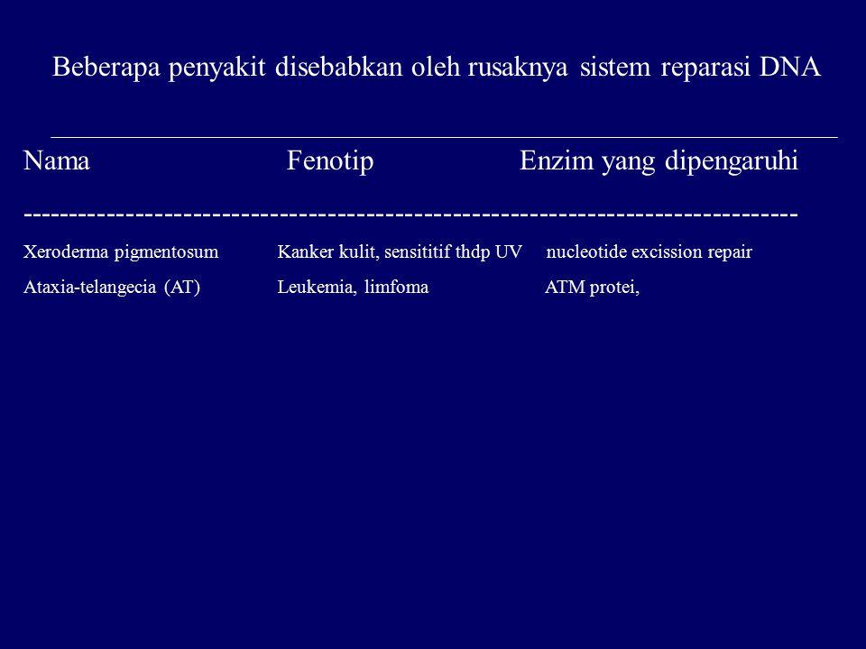 Beberapa penyakit disebabkan oleh rusaknya sistem reparasi DNA Nama Fenotip Enzim yang dipengaruhi --------------------------------------------------------------------------------- Xeroderma pigmentosum Kanker kulit, sensititif thdp UV nucleotide excission repair Ataxia-telangecia (AT) Leukemia, limfoma ATM protei,