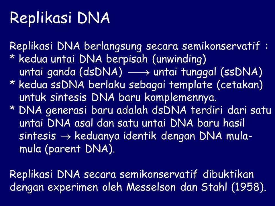 Replikasi DNA Replikasi DNA berlangsung secara semikonservatif : * kedua untai DNA berpisah (unwinding) untai ganda (dsDNA)  untai tunggal (ssDNA) * kedua ssDNA berlaku sebagai template (cetakan) untuk sintesis DNA baru komplemennya.