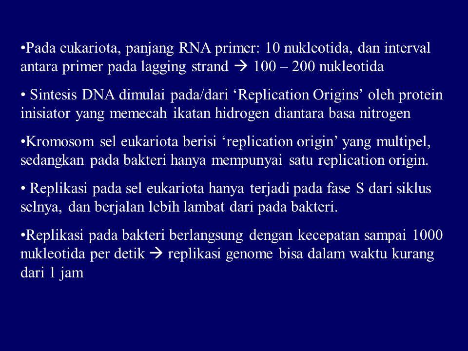 Pada eukariota, panjang RNA primer: 10 nukleotida, dan interval antara primer pada lagging strand  100 – 200 nukleotida Sintesis DNA dimulai pada/dari 'Replication Origins' oleh protein inisiator yang memecah ikatan hidrogen diantara basa nitrogen Kromosom sel eukariota berisi 'replication origin' yang multipel, sedangkan pada bakteri hanya mempunyai satu replication origin.