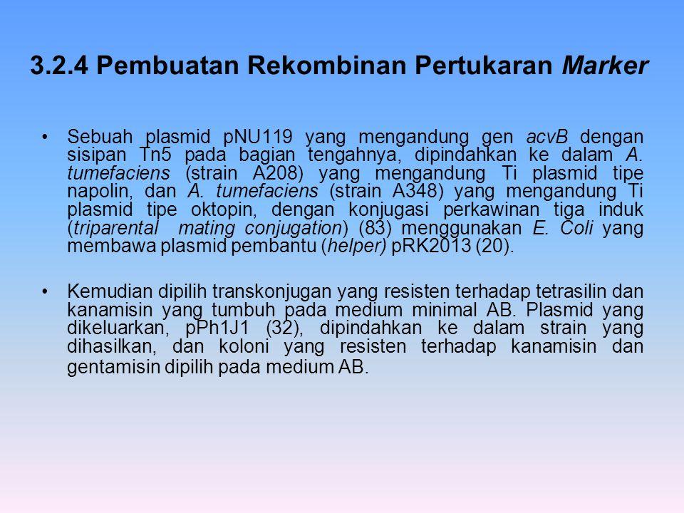 3.2.4 Pembuatan Rekombinan Pertukaran Marker Sebuah plasmid pNU119 yang mengandung gen acvB dengan sisipan Tn5 pada bagian tengahnya, dipindahkan ke d