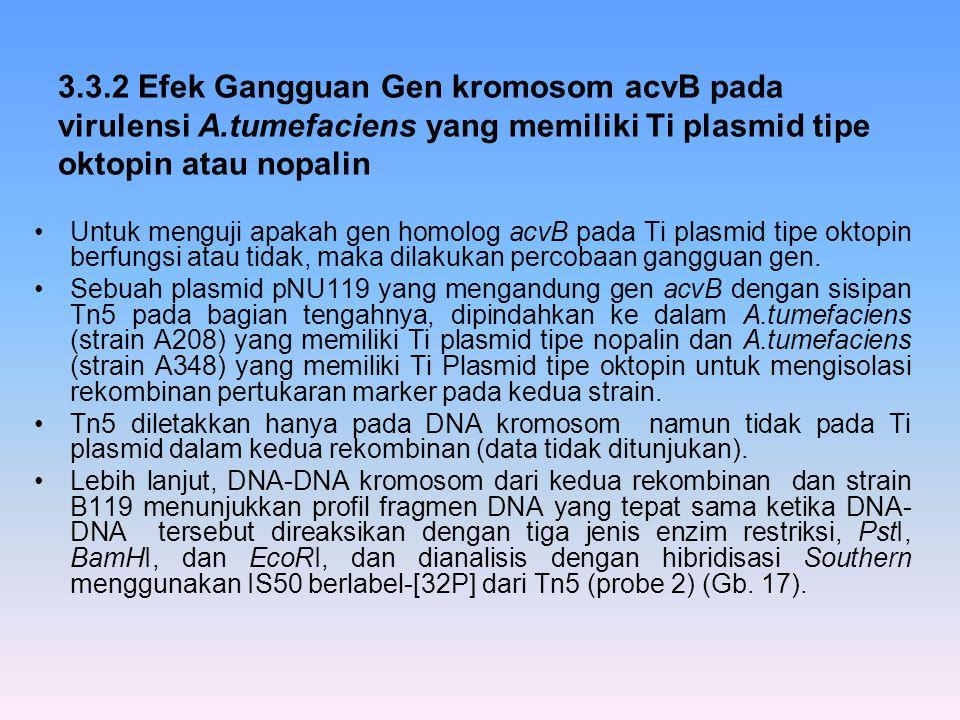 3.3.2 Efek Gangguan Gen kromosom acvB pada virulensi A.tumefaciens yang memiliki Ti plasmid tipe oktopin atau nopalin Untuk menguji apakah gen homolog