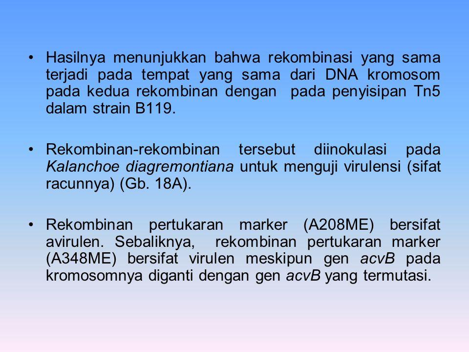 Hasilnya menunjukkan bahwa rekombinasi yang sama terjadi pada tempat yang sama dari DNA kromosom pada kedua rekombinan dengan pada penyisipan Tn5 dala