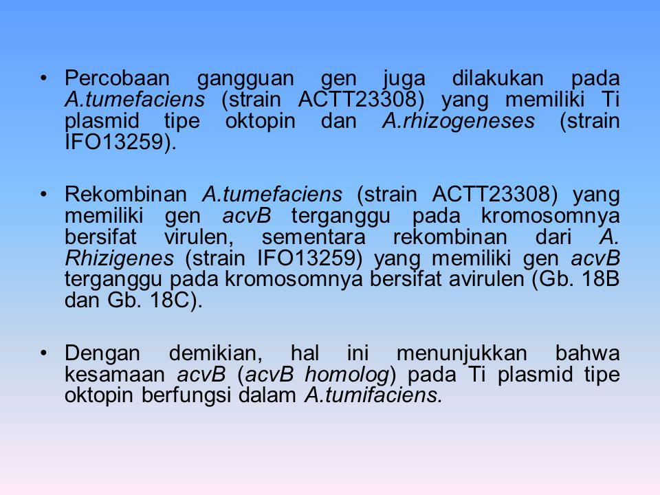 Percobaan gangguan gen juga dilakukan pada A.tumefaciens (strain ACTT23308) yang memiliki Ti plasmid tipe oktopin dan A.rhizogeneses (strain IFO13259)