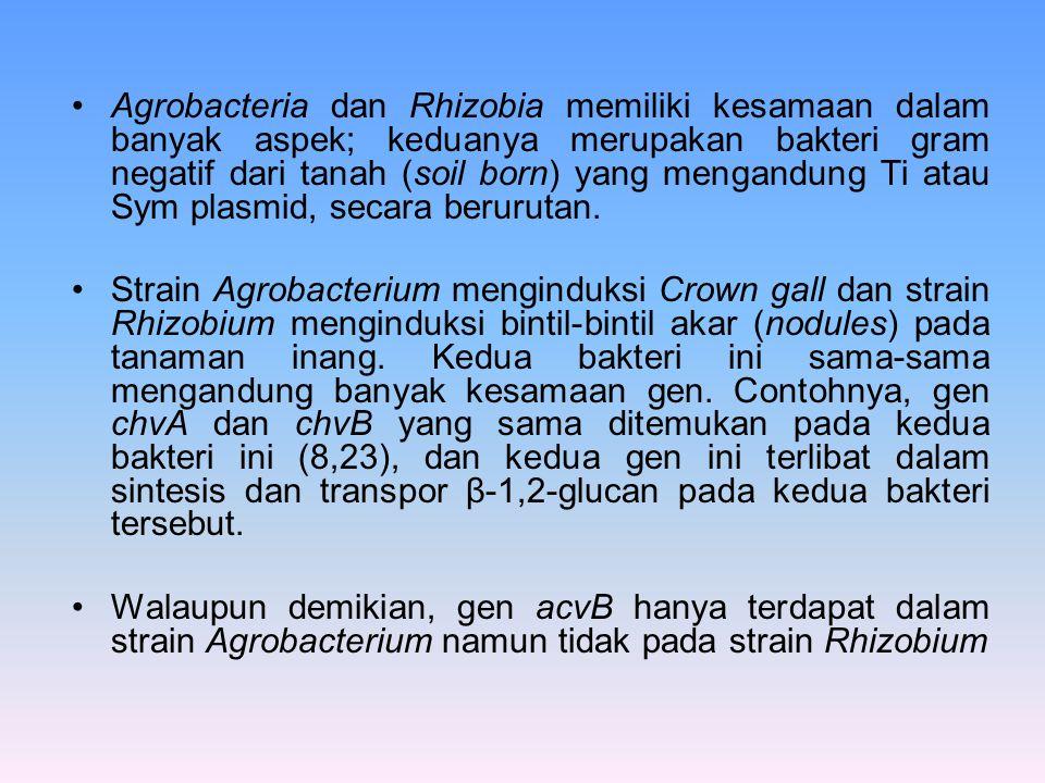 Agrobacteria dan Rhizobia memiliki kesamaan dalam banyak aspek; keduanya merupakan bakteri gram negatif dari tanah (soil born) yang mengandung Ti atau
