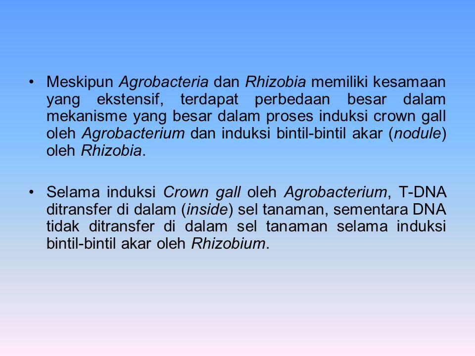 Meskipun Agrobacteria dan Rhizobia memiliki kesamaan yang ekstensif, terdapat perbedaan besar dalam mekanisme yang besar dalam proses induksi crown ga