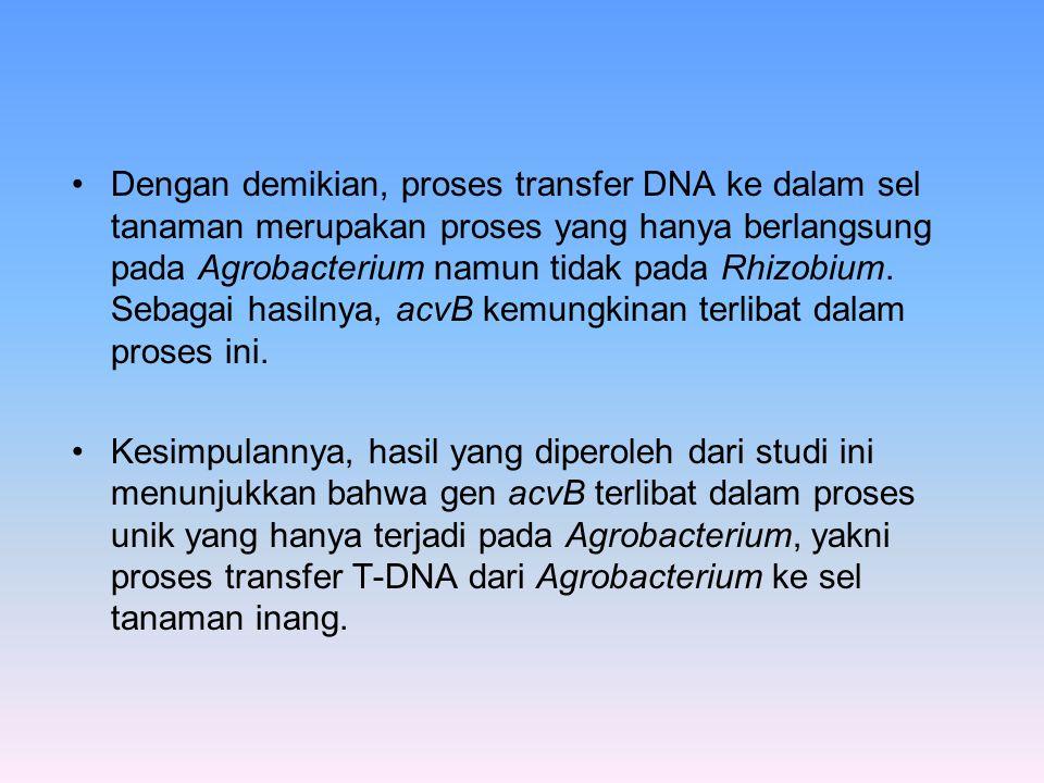 Dengan demikian, proses transfer DNA ke dalam sel tanaman merupakan proses yang hanya berlangsung pada Agrobacterium namun tidak pada Rhizobium. Sebag