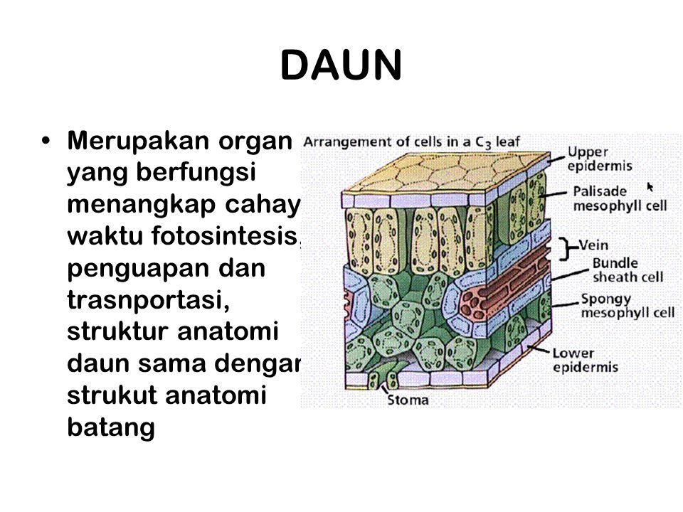 DAUN Merupakan organ yang berfungsi menangkap cahaya waktu fotosintesis, penguapan dan trasnportasi, struktur anatomi daun sama dengan strukut anatomi
