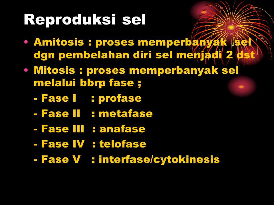 Reproduksi sel Amitosis : proses memperbanyak sel dgn pembelahan diri sel menjadi 2 dst Mitosis : proses memperbanyak sel melalui bbrp fase ; - Fase I : profase - Fase II : metafase - Fase III : anafase - Fase IV : telofase - Fase V : interfase/cytokinesis