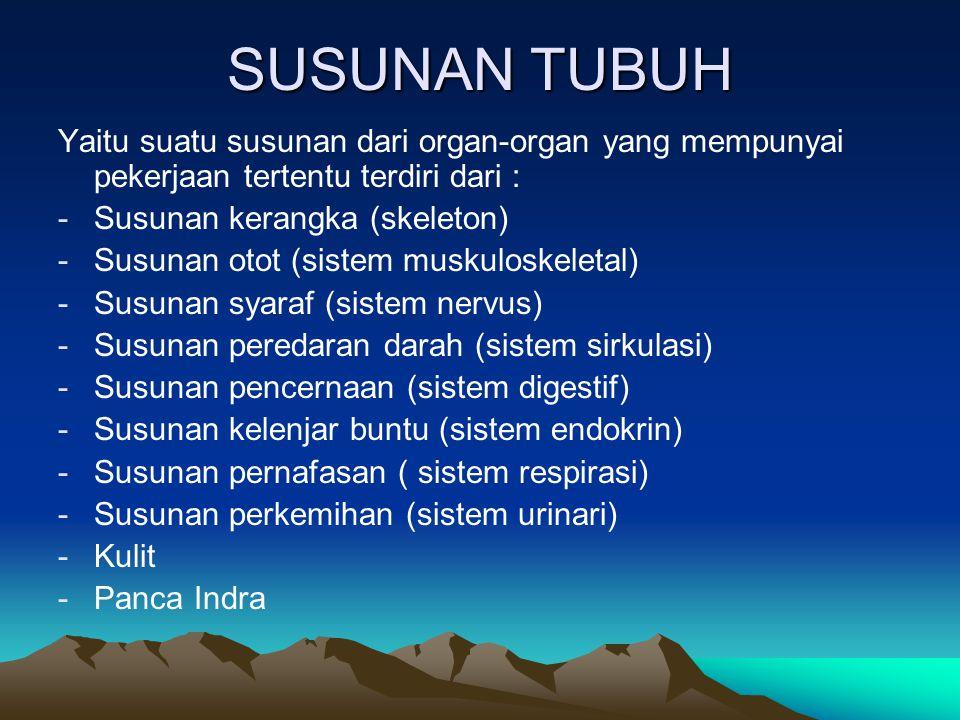 SUSUNAN TUBUH Yaitu suatu susunan dari organ-organ yang mempunyai pekerjaan tertentu terdiri dari : -Susunan kerangka (skeleton) -Susunan otot (sistem muskuloskeletal) -Susunan syaraf (sistem nervus) -Susunan peredaran darah (sistem sirkulasi) -Susunan pencernaan (sistem digestif) -Susunan kelenjar buntu (sistem endokrin) -Susunan pernafasan ( sistem respirasi) -Susunan perkemihan (sistem urinari) -Kulit -Panca Indra