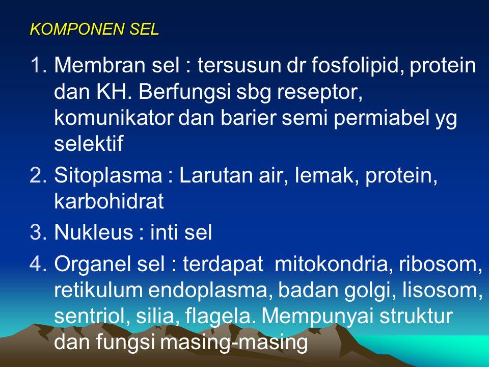 KOMPONEN SEL 1.Membran sel : tersusun dr fosfolipid, protein dan KH.