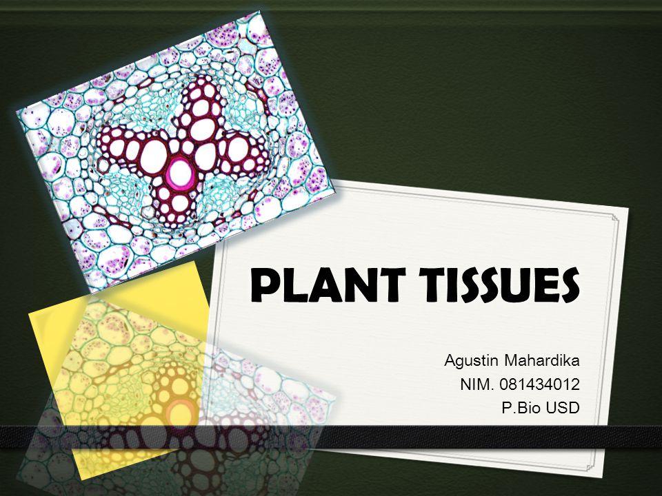 PLANT TISSUES Agustin Mahardika NIM. 081434012 P.Bio USD